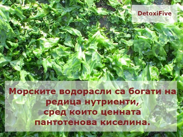 seaweed-672981_640