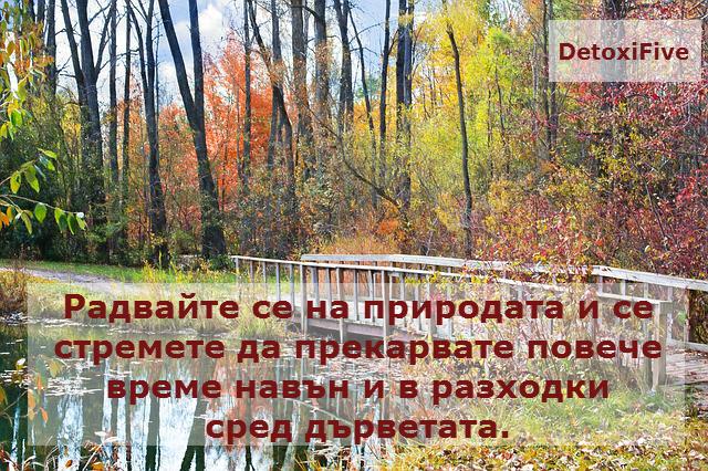 wooden-bridge-986345_640