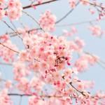 Пролетната умора